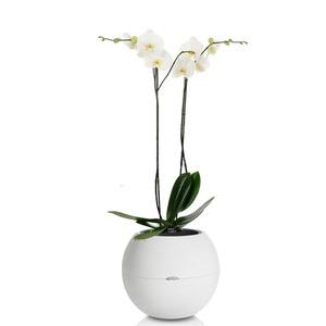 Орхидея Белая Puro 60